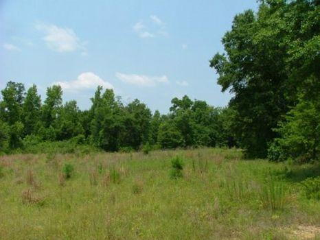 17 +/- Acres : Wrightsville : Johnson County : Georgia