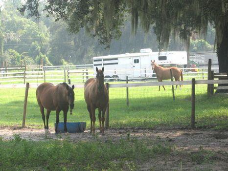Hamilton Road Ranch - Tract 2 : Lakeland : Polk County : Florida
