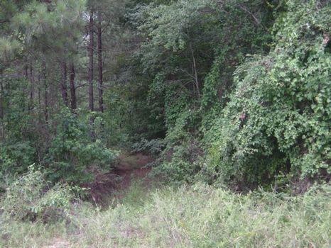 15 Acres : Dublin : Laurens County : Georgia