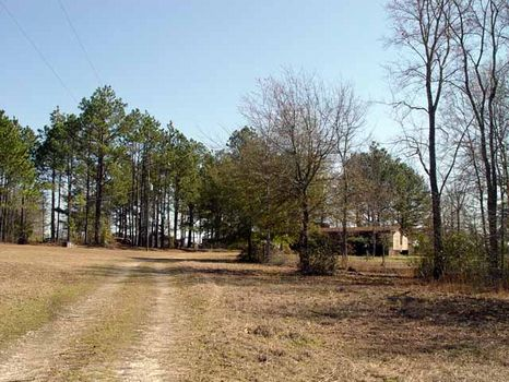 13.84 Acres : Helena : Telfair County : Georgia