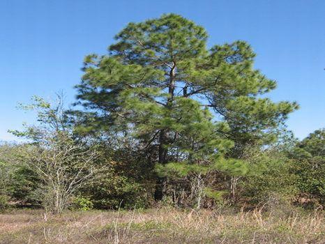 Ponderosa Lane Property : Lakeland : Polk County : Florida