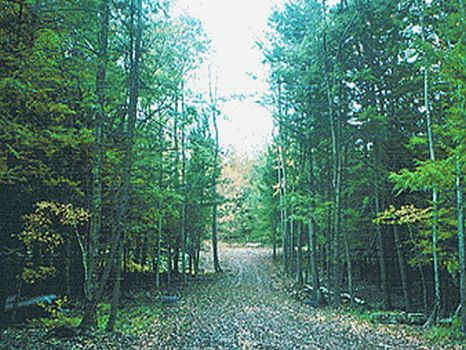 8 Acre Wooded Lot with Driveway : Hancock : Delaware County : New York