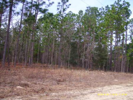 5.7 Acres (cl206) : Hawthorne : Alachua County : Florida