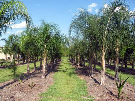 Ewell Road Nursery : Lakeland : Polk County : Florida