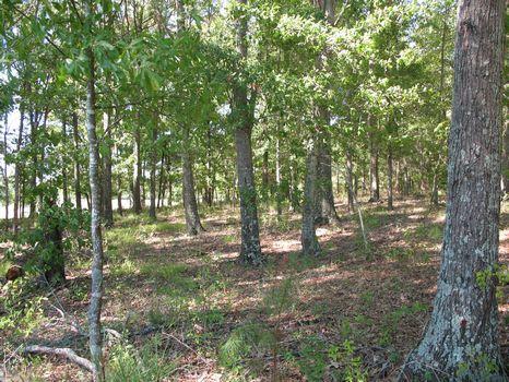 1.26 Ac lot near Montgomery : Montgomery : Montgomery County : Alabama