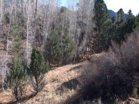 20 Acres Surrounded By Conservation : Buena Vista : Chaffee County : Colorado