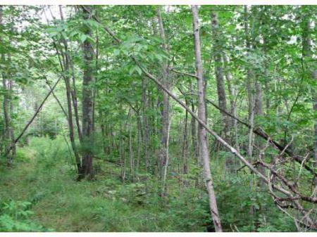 Land In Orrington Ii : Orrington : Penobscot County : Maine