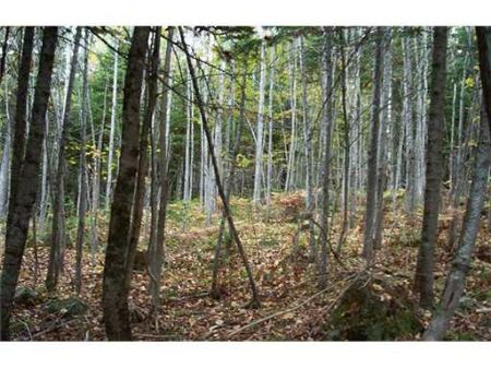 Nice Wooded Lot : Ripley : Somerset County : Maine