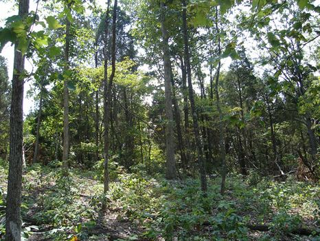 2.9 Acres, Close to Town : Munfordville : Hart County : Kentucky