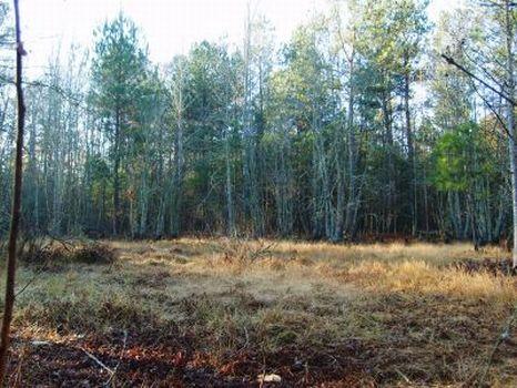 Red Oak- 12 Acres in Barnwell Co. : Barnwell : Barnwell County : South Carolina