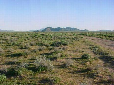 Arizona Rancheros #1002 Lot 305 : Holbrook : Navajo County : Arizona