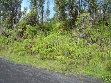 Hawaiian Estates 1 Acre- $39,950 : Kona : Hawaii County : Hawaii