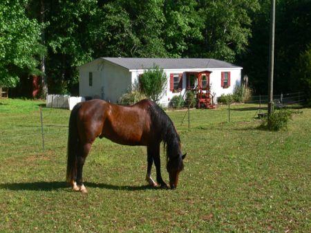 Affordable Mini-farm - 5ac : Watkinsville : Oconee County : Georgia