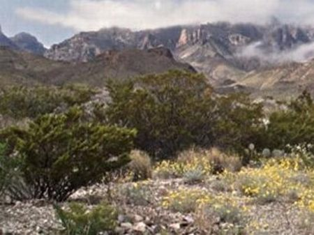 20 Acres - Tract: 2835 - $10,950 : Terlingua : Brewster County : Texas