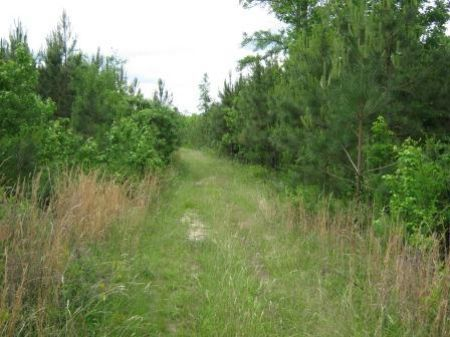 17 Acre Hunting, Recreational Tract : Blackstock : Chester County : South Carolina