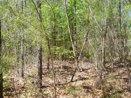 10 Acres : Starkville : Oktibbeha County : Mississippi