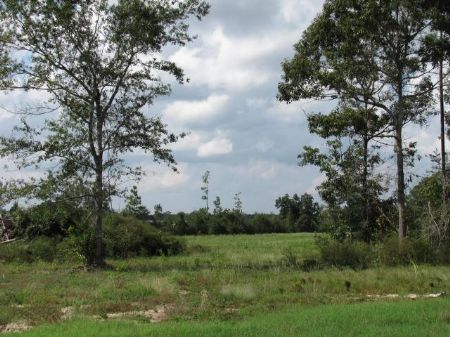 5.40 Acre Estate-sized Lot : Carriere : Pearl River County : Mississippi