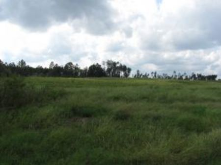 5.10 Acre Estate-sized Lot : Carriere : Pearl River County : Mississippi
