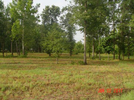 2 River Lots - Camden : Camden : Wilcox County : Alabama