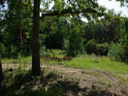 11 Acres - Near Interstate - Moody : Moody : Saint Clair County : Alabama