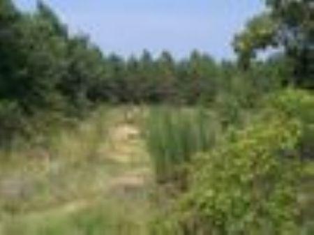 11+ Acres Near Camden : Camden : Kershaw County : South Carolina