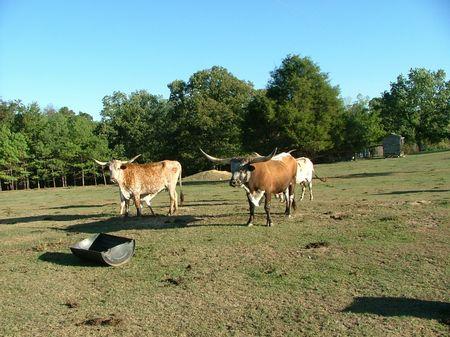 10 AC - Easy G Farm : Section : Jackson County : Alabama