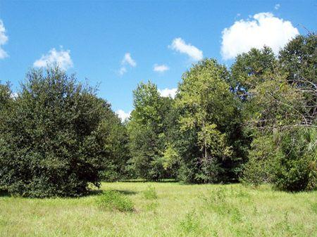 Lithia Development Acreage : Lithia : Hillsborough County : Florida