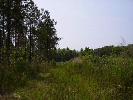 11 Acres : Metter : Candler County : Georgia