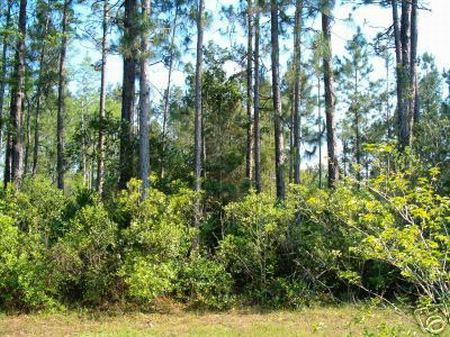 1/4 (0.25 Acres) -$6,950 : Polk City : Polk County : Florida