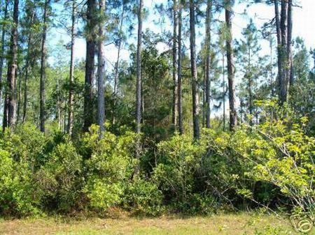 1/4 (0.25 Acres) -$3,950 : Polk City : Polk County : Florida