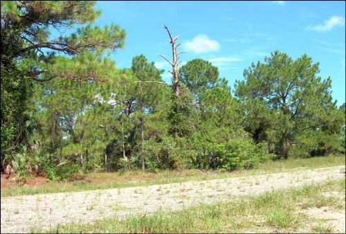 Florida Residential Lot .49 Acres : Lehigh Acres : Lee County : Florida
