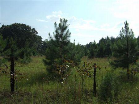 9.7 High acres, paved road frontage : Gillisonville : Jasper County : South Carolina