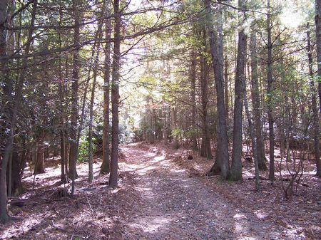 11 Ac Wooded Mtn Land Views : Dugspur : Carroll County : Virginia