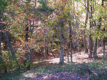 11 Ac Mira Mountain Views Wooded : Dugspur : Carroll County : Virginia