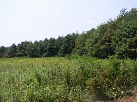 5 Ac Mtn Land, Views, 50% Wooded : Galax : Grayson County : Virginia