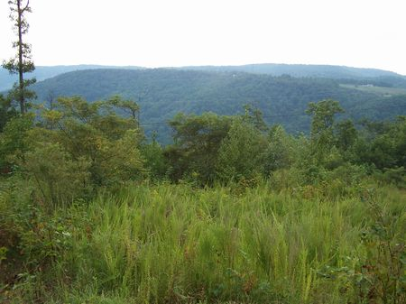 1.66 Ac Mtn Land, Buildable, Wooded : Fancy Gap : Carroll County : Virginia