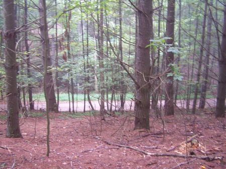 1 Ac Mtn Land, Wooded, Buildable : Independence : Grayson County : Virginia