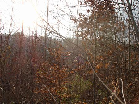 Prime Acreage Near Oak Ridge : Oliver Springs : Morgan County : Tennessee
