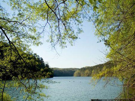 Smith Lake Waterfront Lot - New : Jasper : Winston County : Alabama
