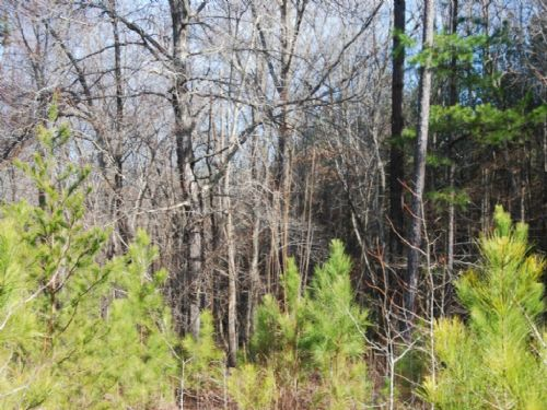 9.77 Acre Hunting Tract Or Homesite : Spartanburg : South Carolina