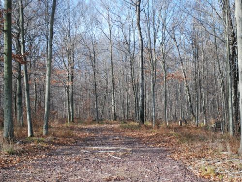 Lot 82, The Woods At Duck Harbor : Equinunk : Wayne County : Pennsylvania