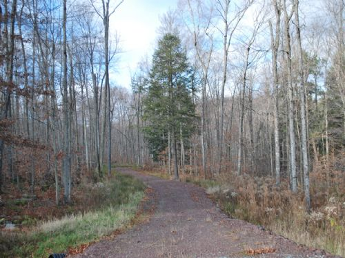 Lot 84, The Woods At Duck Harbor : Equinunk : Wayne County : Pennsylvania