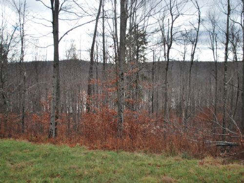Lot 68, The Woods At Duck Harbor : Equinunk : Wayne County : Pennsylvania