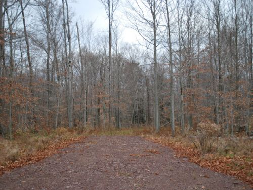 Lot 81, The Woods At Duck Harbor : Equinunk : Wayne County : Pennsylvania