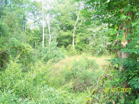 3+ Acres - Good Homesite : Swainsboro  : Emanuel County : Georgia