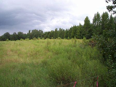 3.29 Acre Country Homesite : Swainsboro  : Emanuel County : Georgia