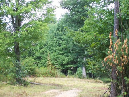 13 Tracts Of Mtn Land, Buildable : Galax  : Carroll County : Virginia
