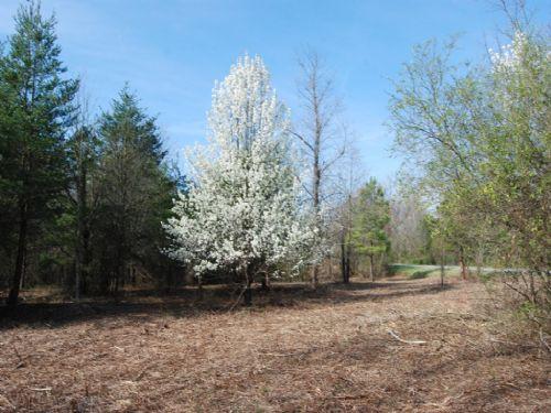 20 Acres Near The Stateline : New Prospect : Spartanburg County : South Carolina
