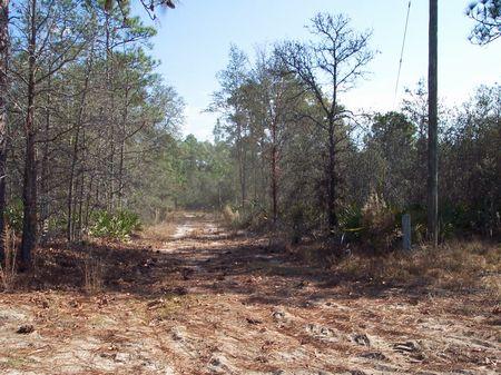 13 Acres Recreational Tract : Reidsville  : Tattnall County : Georgia