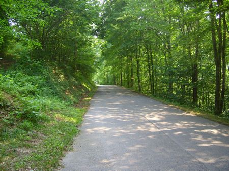 5 Wooded Acres, East TN, Terms : Sharps Chapel  : Union County : Tennessee